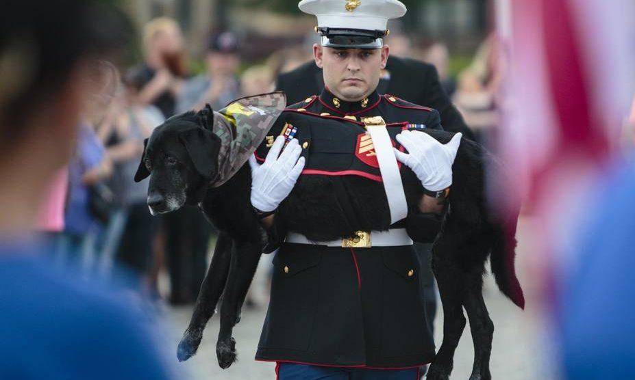 Despedida De Um Cão: Comovente Despedida De Cão Que Serviu Na Guerra