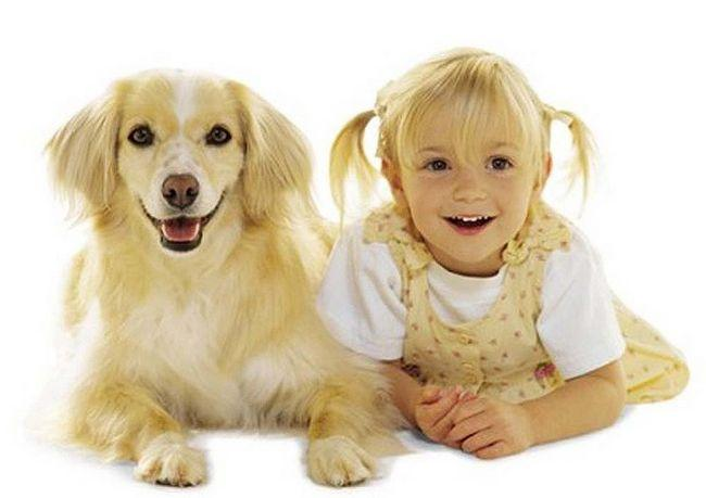 awebic-cachorros-e-donos-12 (1)